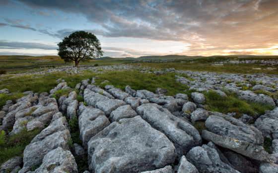 поле, дерево, камни