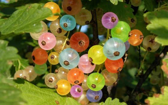 ягоды, смородина, радуга, макро,