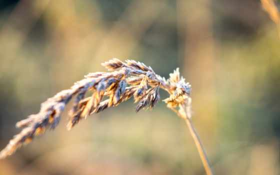 семья, трава,