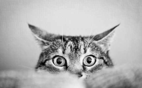 кот, black, white, eyes, cats,