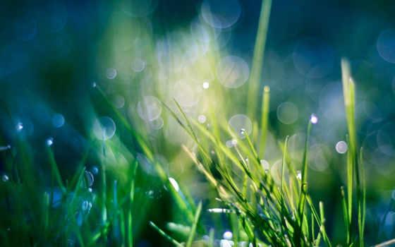 роса, макро, капли, растения, природа, трава, зелёный, waters,