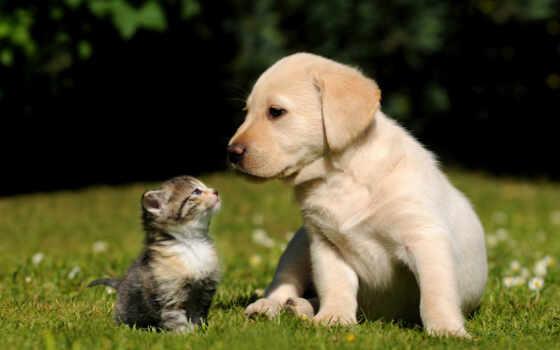 собака, трава, котенок, кот, щенок, biglit, красивый, animal, retriever