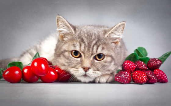 кошки, zhivotnye, коты