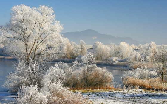 winter, trees, scenery