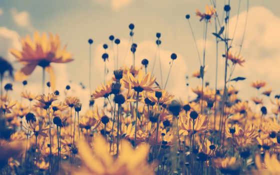 cvety, полевые, поле, летом, summer, красивые, найти, yellow,