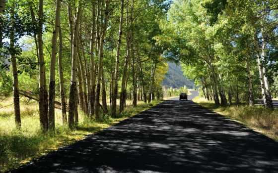 природа, дорога, trees, summer, лес, телефон, красивая, картинку, landscape, страница,