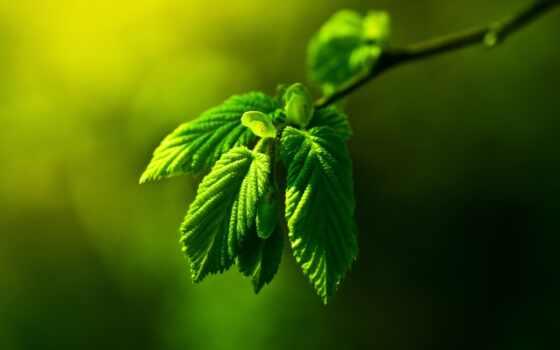 лист, зеленое, makryi, природа, drop, permission, leaf, оригинал, free, картинка
