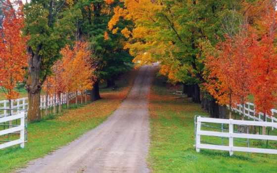 осень, дороги, природа