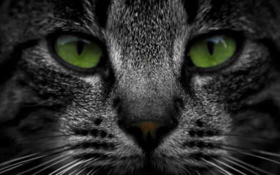 кот, striped, морда