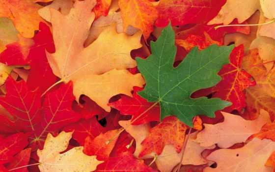 лист, summer, this, последний, how, нип, листва, осень, осенью,