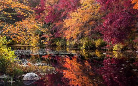 осень, пасть, trees, природа, desktop, тона, gorgeous, rivers, goodfon,