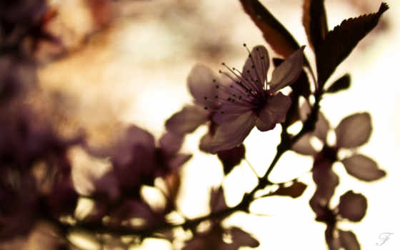 природа, nice, flowers, pictures, photos, free,