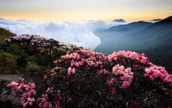 кусты, розовых, цветов, cvety, горах, разных, роз, горы, разрешениях,