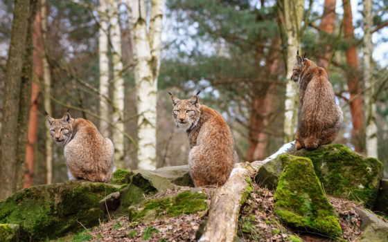красивые, фотографий, медведь, животных, facts, добрым, утром,