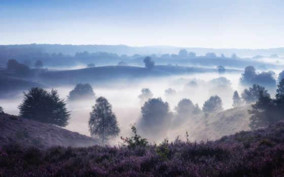 нидерландов, фотограф, mesmerizing, туман, со, цветущими, полями, пейзаж, фотографий, albert,