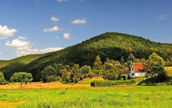 природа, коллекция, поле, card, summer, деревня, красивый, лес