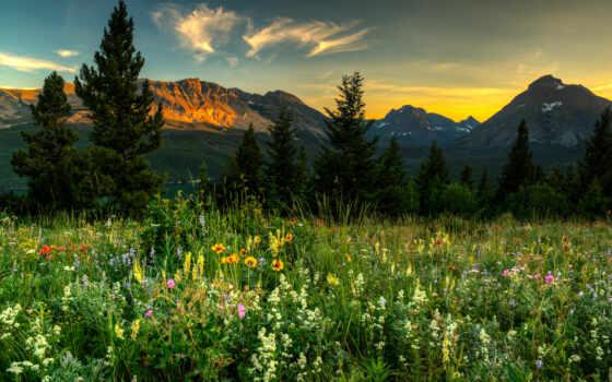 поляна, гора, цветы, добавить, показать, есть, цвета, height, hill, деревушка