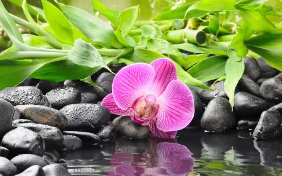 орхидея, скалы, цветы