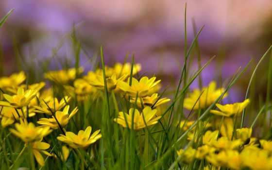 flowers, yellow, цветы