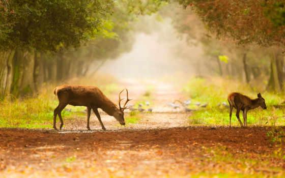 олени, природа, animals