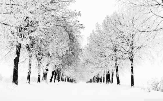 аллея, зимняя, картинка
