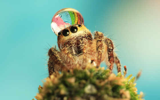 паук, пауки, пауков, waters, детства, природу, любит, сада, своего, глубине,
