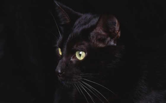 кот, nero, black, gatto, desktop, sfondo, ди,
