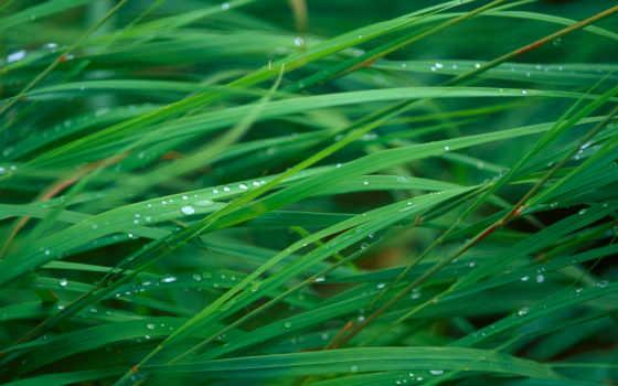mac, трава, капли, роса, макро, тег, waters, которых,
