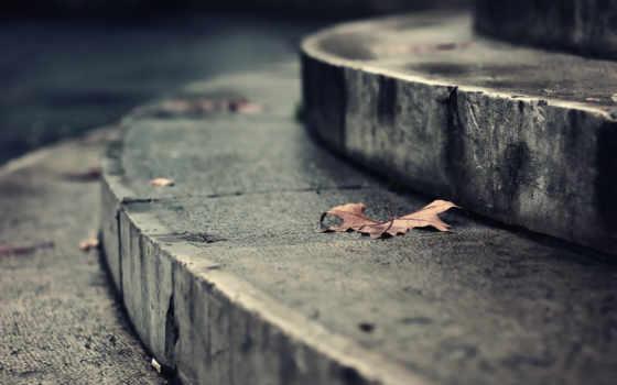 осень, лестница, leaf, stair, листья, park, dry, photography,