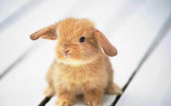 кролик, вышивки, bunny, декоративный, схема, схемы, заяц, кроликов, кролики, декоративные, автора,