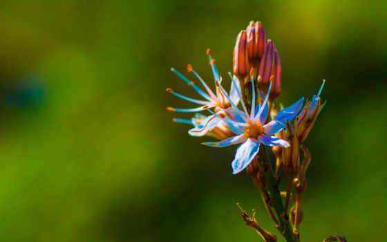 , цветок, лепестки, пестики,