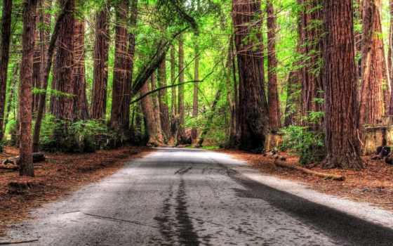 романтика, природа, trees, лес, дорога,