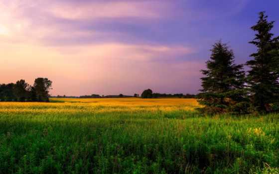 поле, природа, подборка, dexp, trees, красивые, мониторы, монитор, купить,