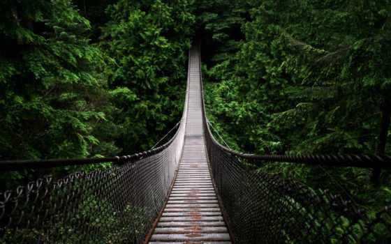 ,, зеленый, растительность, природа, лес, природный заповедник, тропический лес, подвесной мост, лист, экосистема, мост, lynn canyon suspension bridge, capilano suspension bridge, lynn canyon park, арочный мостик, simple suspension bridge