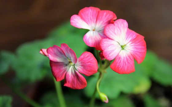 Цветы 25451