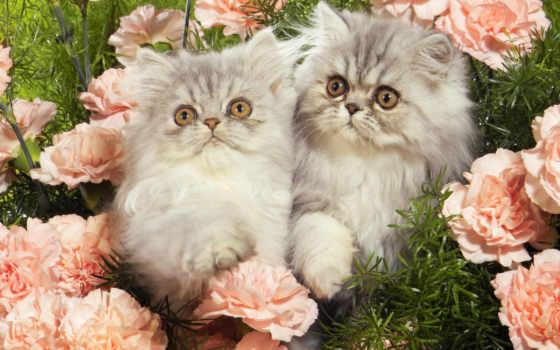 zhivotnye, кошки, широкоформатные