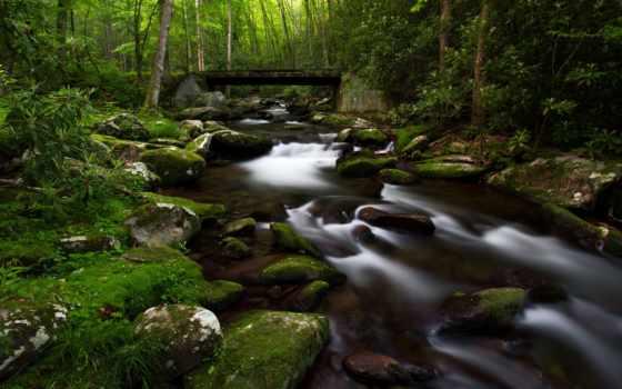лес, река, мох
