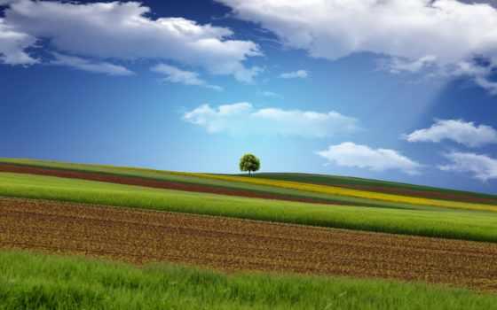 поле, дерево, небо