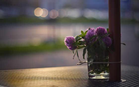 clover, свет, макро, букет, цветы, glass, блики, улица,