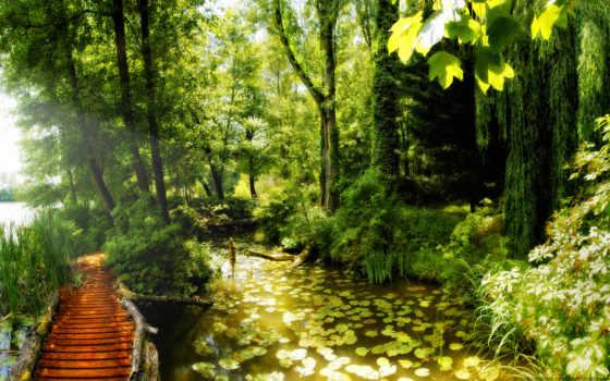тропинка, лес, природа