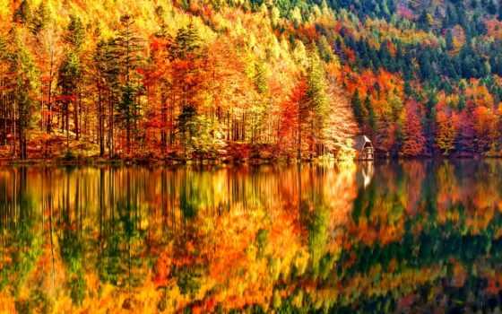 осень, лес, октябрь