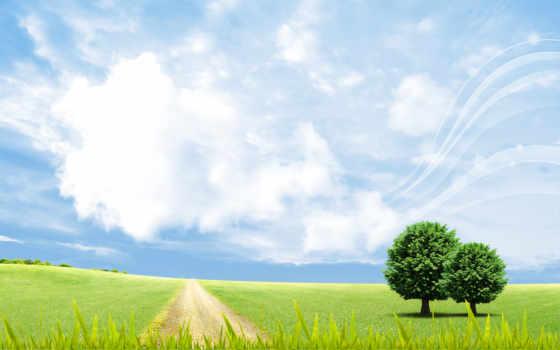 поле, summer, небо