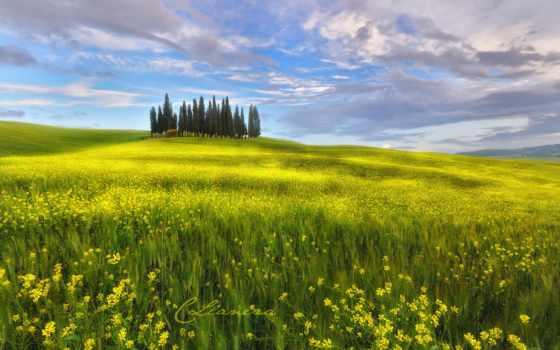 toscane, les, italie, ciel, printemps, toscana, champs, colza, fonds, fleurs, ecran,