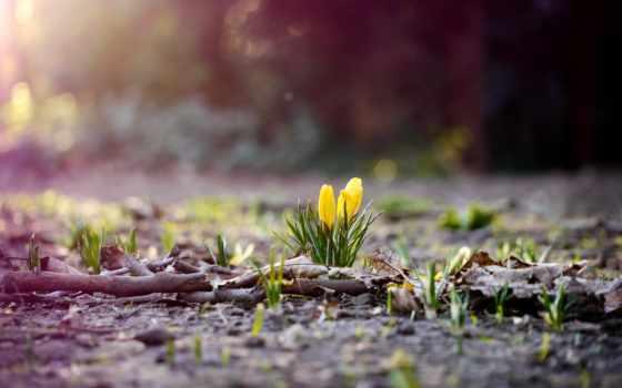 фотки, может, весна, приятные, кому, ранняя, приглянется, начинающейся,