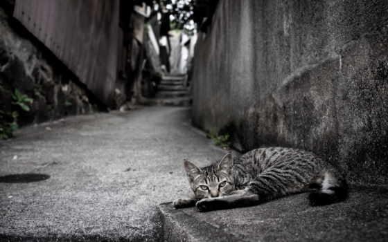 gato, calle, улица, кот, para, fondos, pantalla,