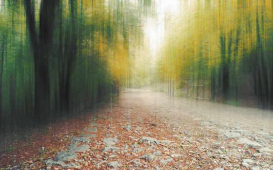 тропинка, dreamy, desktop, листва, resolutions, лес, размытость,
