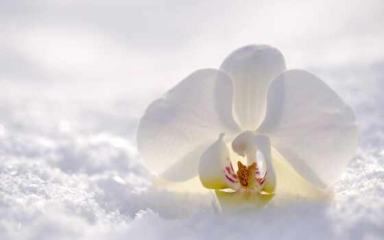 цветы, life, утро, winter, wish, род, красивый, обвал, popular, орхидея, урок