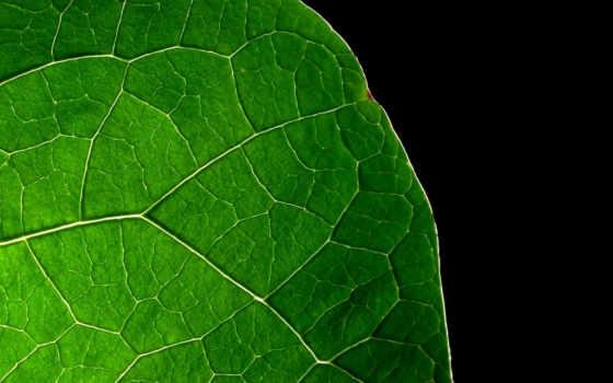 лист, зелёный, фоне, черный, черном, заставки,