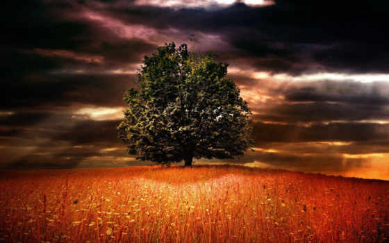 дерево, одинокое, если