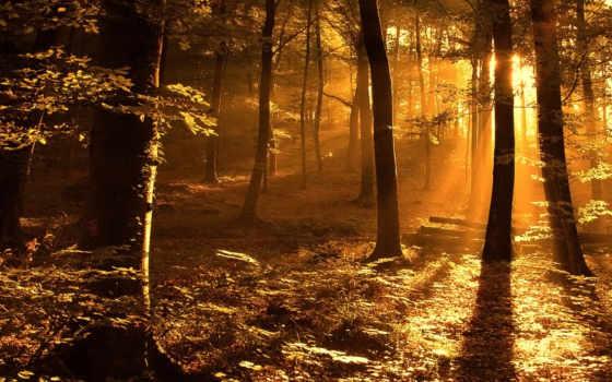 лес, high, ipad